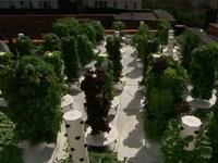 Family Grows Garden in Backyard Swimming Pool - ABC News