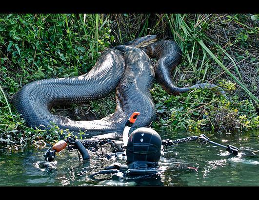 8-Meter Anaconda