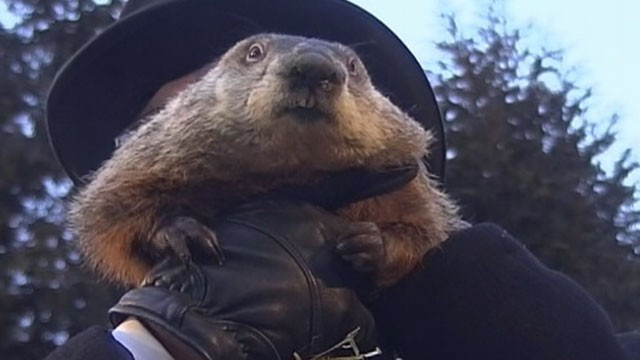 "PHOTO: An early spring is on the way, according to groundhog ""Punxsutawney Phil.""When the Pennsylvania groundhog emerged from his dwelling at Gobbler's Knob on Feb 2, 2013, he did not see his shadow."