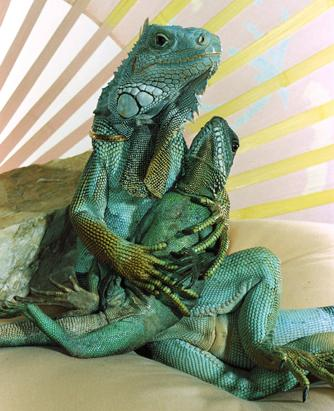You Live With WHAT Picture  Lounge Lizards Calif Man