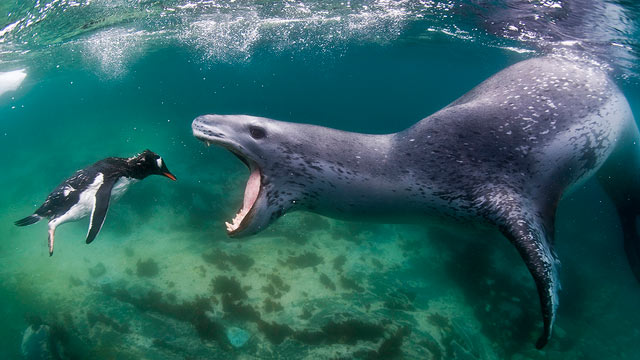 Image result for sea lion scary