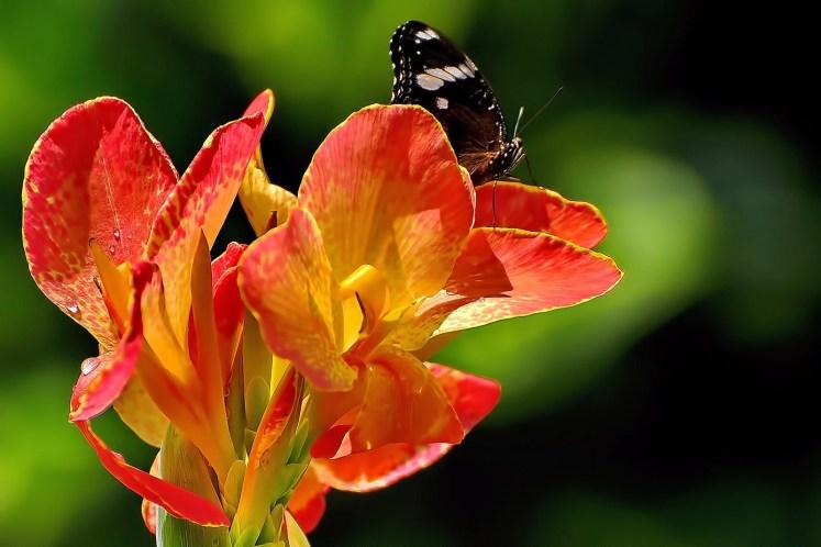 Visit the Terrazas de Flores Botanical Garden