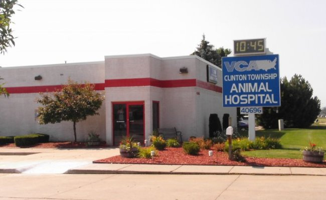 Vca Clinton Township Animal Hospital In Clinton Township Mi Whitepages
