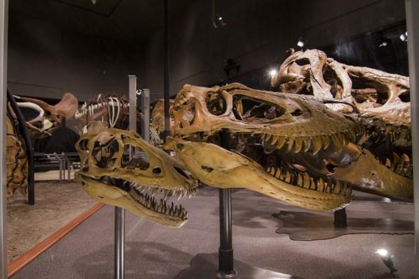 Museum Of Rockies Coupons In Bozeman 8coupons