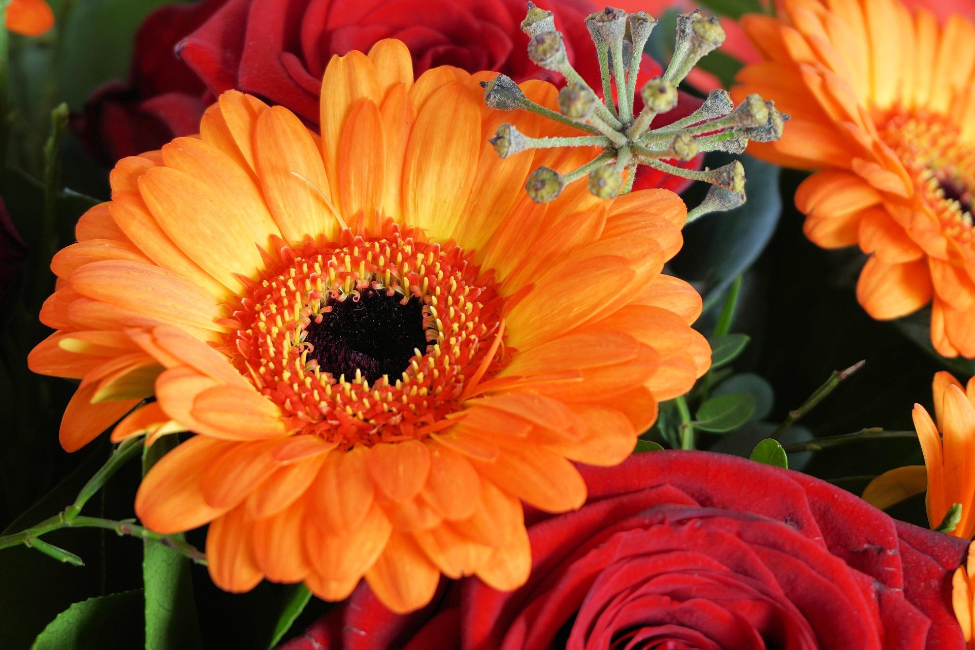 Die besten Adressen fr Blumen Und Pflanzen in Dresden