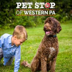 Invisible Fence Greensburg Pa Solar Energy Diagram How Does It Work Save 100 Off Electric Dog In Western Pet Stop Of