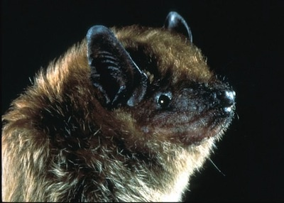 Slideshow Everything you didnt know about bats in Los