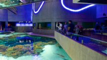 Baltimore Aquarium Package Deals Lamoureph