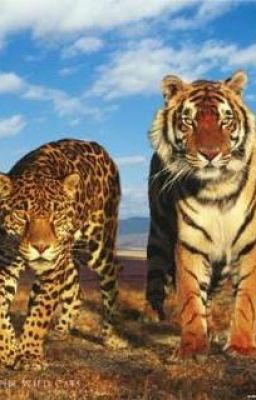 Wallpaper Hd Mystry Girl Leopard And Tiger Vampires And Werewolfes Andy Wattpad