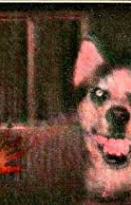 Test Your Limits Summon Creepypastas Smile Dog Wattpad
