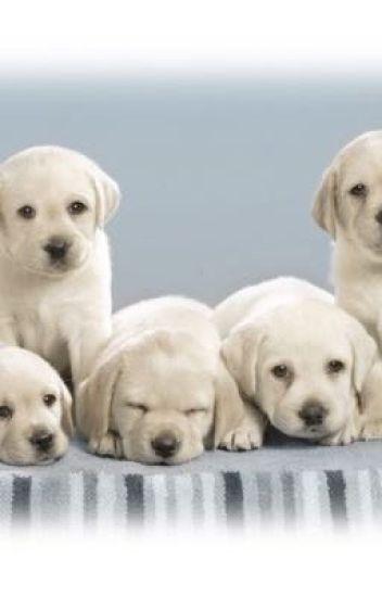 5 Cute Little Puppies Ashxoxo Wattpad