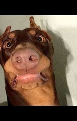Funny Dogs Ste Hunder Wattpad