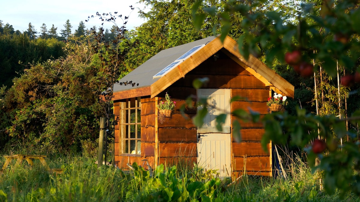 Cosy Secluded Cabin Tiny Houses For Rent In Rathdrum