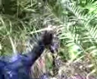 Download vidio bokep Gerbak Jemo Talo Bengkulu Selatan 02 mp4 3gp gratis gak ribet