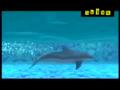 Shiva And Shark