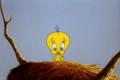 Looney Tunes Episode Dog Pounded
