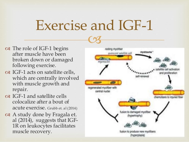 IGF-1 & Exercise