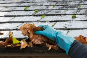 Spring Plumbing Tips - Outside Tips from A1 Sewer & Drain