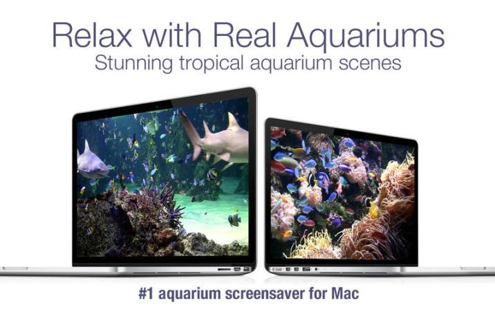 2_Aquarium_Live_HD_ocean_screensaver.jpg