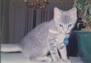 Stella kitten