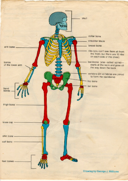Two Labeled Skeletons - Home schooling with A2Z Home's ...