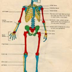 Human Skeleton Diagram Labeled For Kids 3 Phase Starter Wiring Two Skeletons - Home Schooling With A2z Home's Cool | Homeschooling