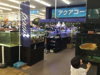 Super Viva Home Plus - Saitama - Japan Travel