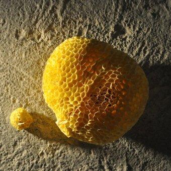 Porifera2