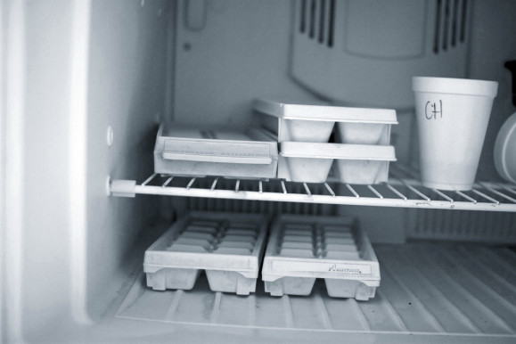 Ice Trays