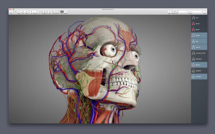 1_Essential_Anatomy_5.jpg