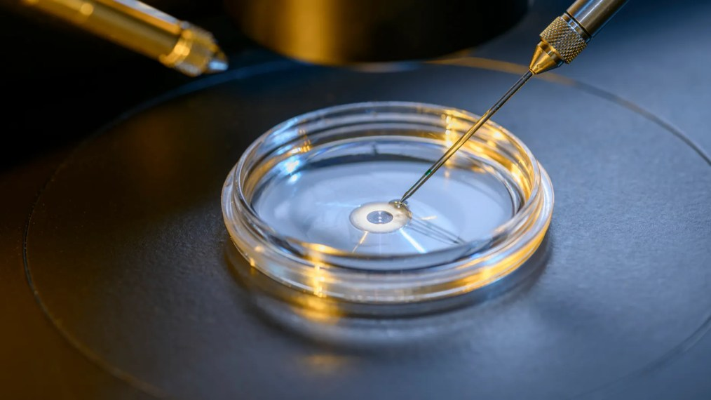 An estimated 8 million babies have been born from IVF worldwide since 1978, according to a report.