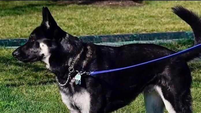 'Dog Whisperor' on why Biden's dog misbehaves