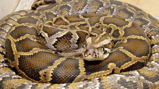 Python file.jpg