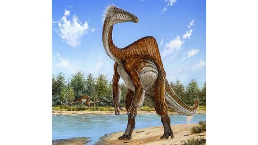 Odd Dinosaur_Cham640360102314.jpg