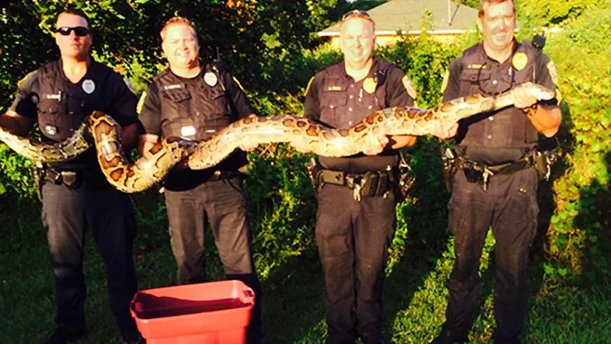 pythonsnake3.jpg