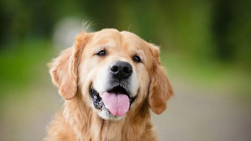 dog-bacteria