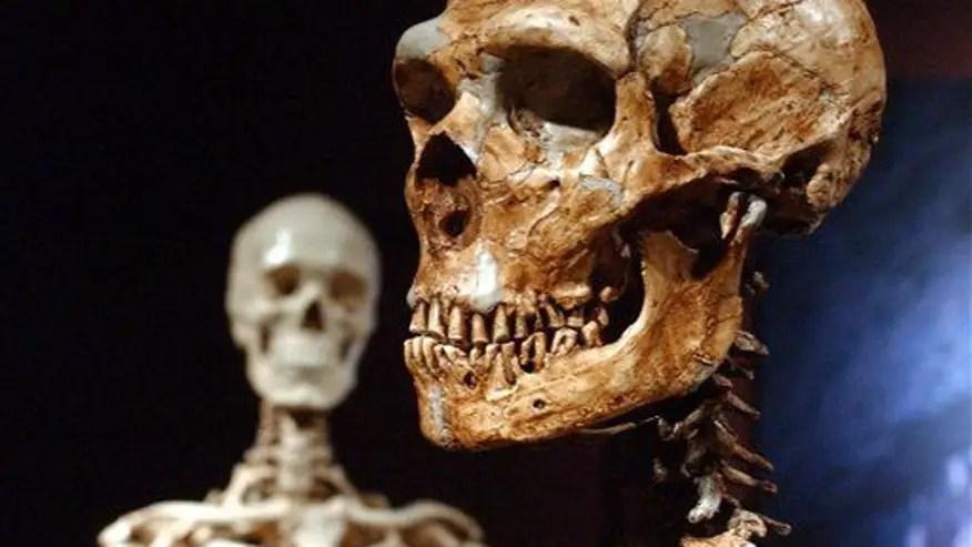 Modern humans no brainier than neanderthals, study finds