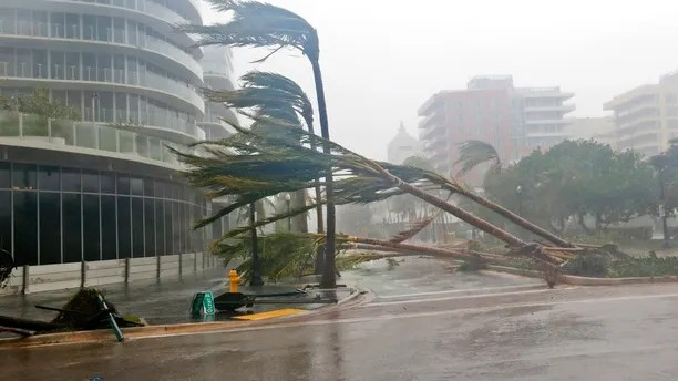 Recently planted palm trees lie strewn across the road as Hurricane Irma passes by, Sunday, Sept. 10, 2017, in Miami Beach, Fla. (AP Photo/Wilfredo Lee)