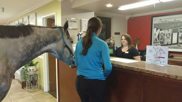 The woman credits her horse's calm behavior through their hotel stopover to good training.