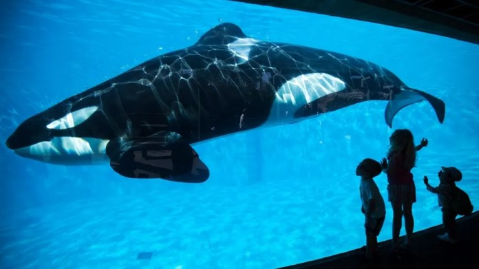 The news comes two years afterSeaWorld announced that it would cease both actions.