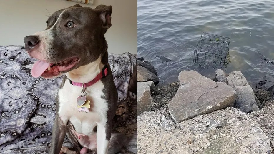 A pit bull was found locked inside a black cage floating in a New Jersey bay.