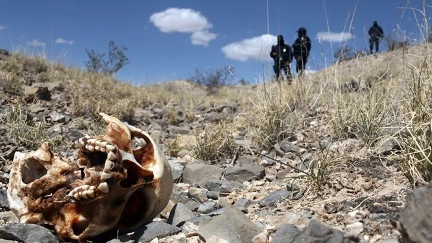 Image result for mass grave in mexico