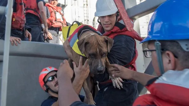 171025-N-UX013-233 PACIFIC OCEAN (Oct. 25, 2017) Sailors help Zeus, one of two dogs who were accompanying two mariners who were aided by the amphibious dock landing ship USS Ashland (LSD 48). Ashland, operating in the Indo-Asia-Pacific region on a routine deployment, rescued two American mariners who had been in distress for several months after their sailboat had a motor failure and had strayed well off its original course while traversing the Pacific Ocean. (U.S. Navy photo by Mass Communication Specialist 3rd Class Jonathan Clay/Released)