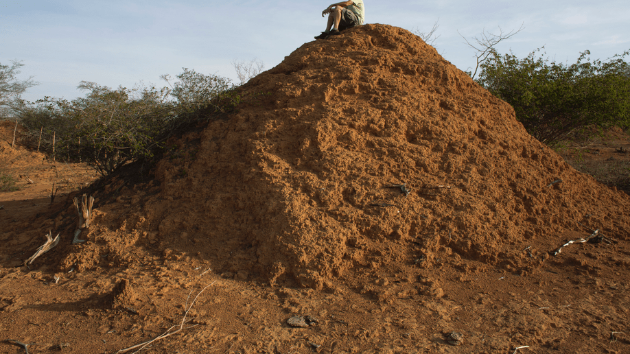 In Brazil backlands termites built millions of dirt mounds  Fox News