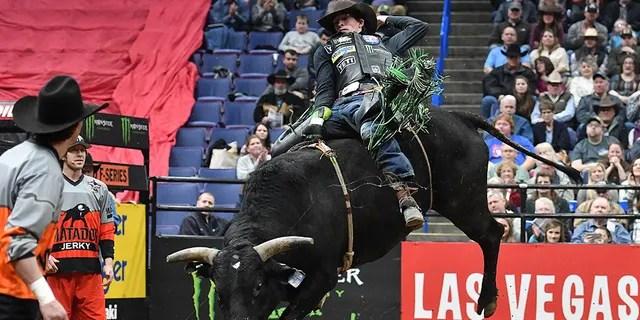 bull that killed professional