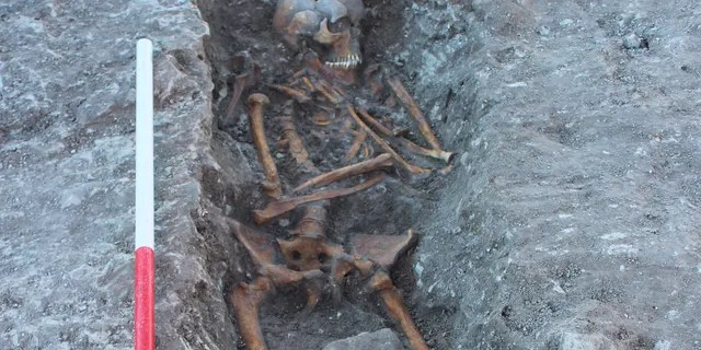 One of the skeletons uncovered at the site. (Thames Water)