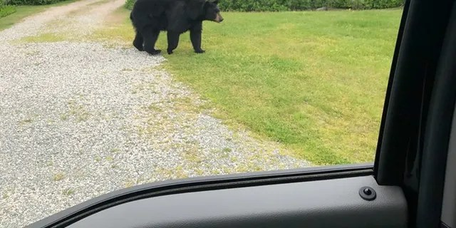 """Wildlife experts urge anyone who comes in contact with a black bear to remain calm and """"secure yourself as quickly as possible."""""""