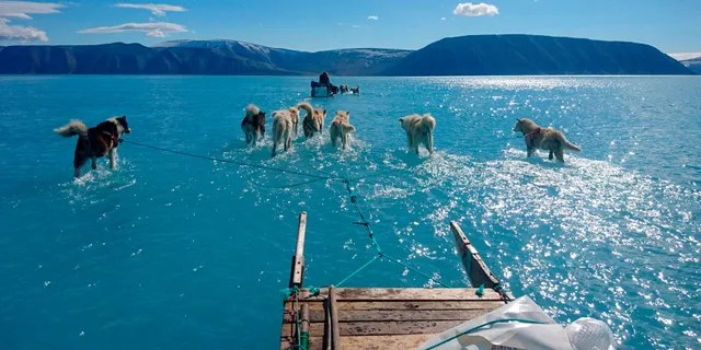 Sled dogs make their way in northwest Greenland with their paws in melted ice water.