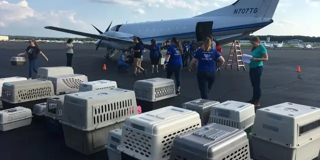 The animals were flown toManassas Regional Airport in Virginia where they were then distributed to local animal shelters.