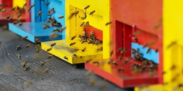 "Prescott Valley, Ariz., resident David Keller thinks the application process to register an emotional support animal is too easy — so he tried registering a swarm of bees as his service pet.<br data-cke-eol=""1"" data-recalc-dims="